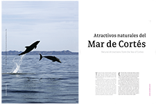Natural attractions from the sea of Cortes - Mario Gómez C.