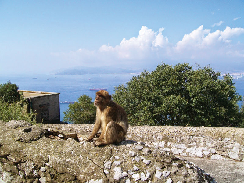 The Ape's Den is located halfway up to the summit of the Natural Reserve of the Rock of Gibraltar.
