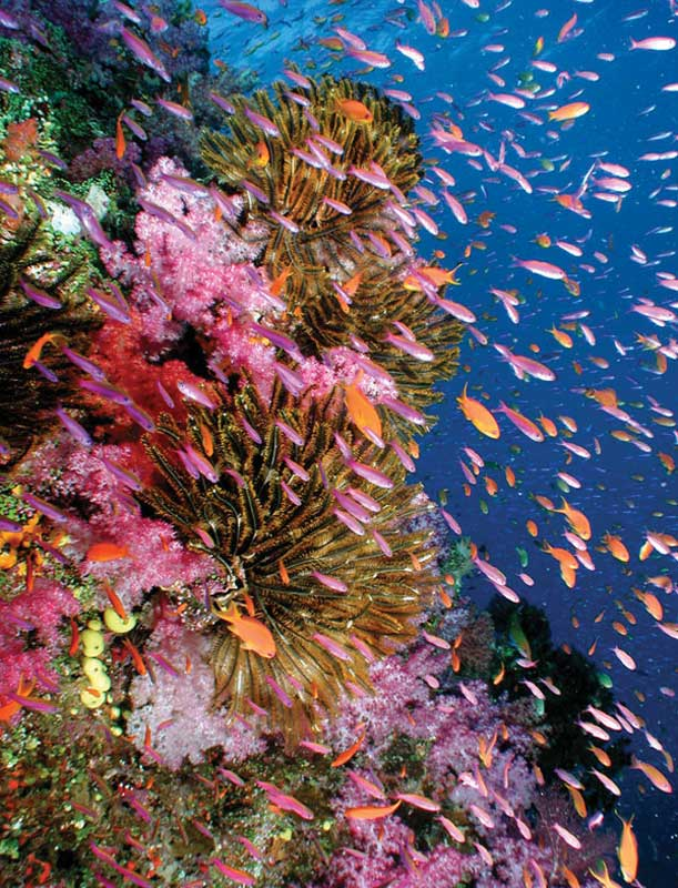 It is possible to find corals up to 6,000 m deep.