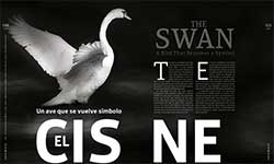 The Swan - Maruchy Behmaras